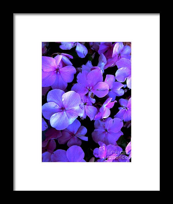 Flower Framed Print featuring the photograph Impatients by Nancie Johnson