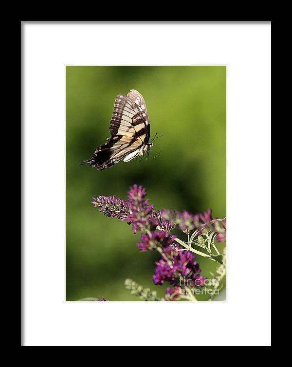 Framed Print featuring the photograph In Flight by Douglas Stucky