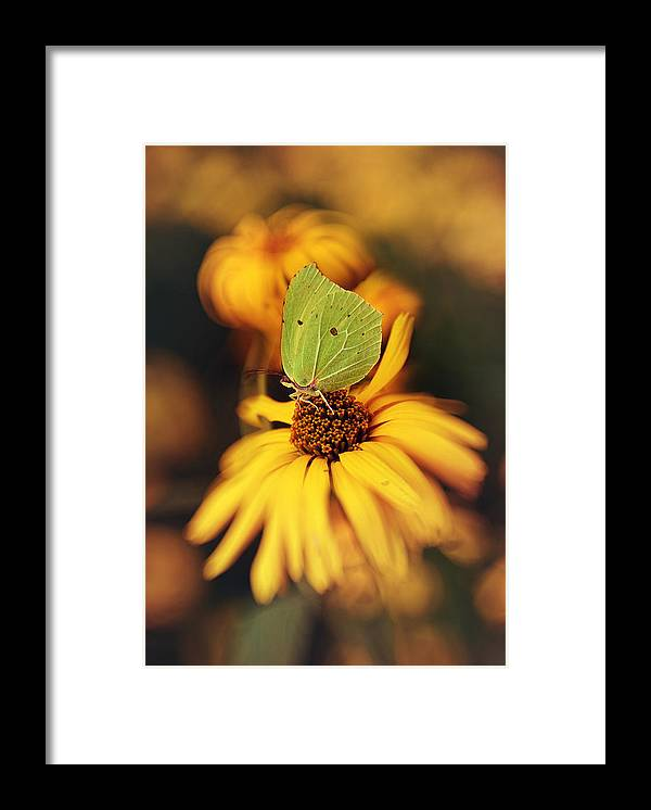Macrophotography Framed Print featuring the photograph In My Garden by Jaroslaw Blaminsky