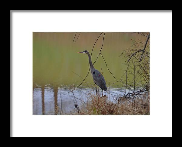 Paul Lyndon Phillips Framed Print featuring the photograph In Search Of Breakfast - C9509c by Paul Lyndon Phillips