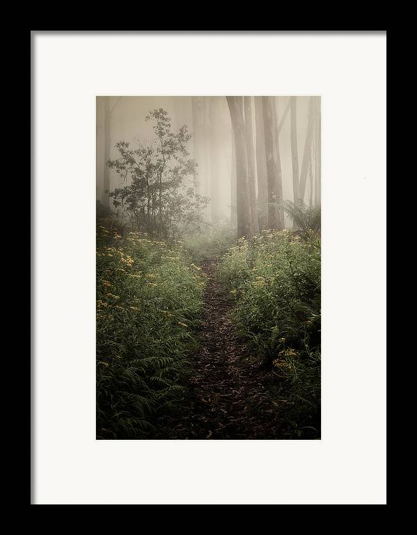 Fog Framed Print featuring the photograph In Silence by Amy Weiss