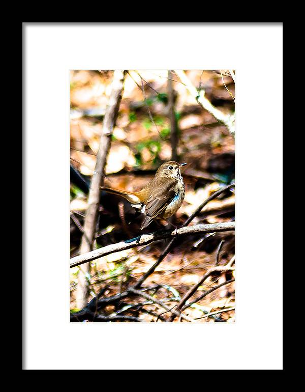 Carolina Wren Framed Print featuring the photograph In The Bushes by Charles Moore