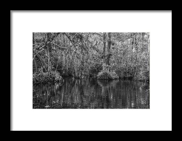Tamiami Trail Framed Print featuring the photograph In The Everglades by Thomas Schreiter
