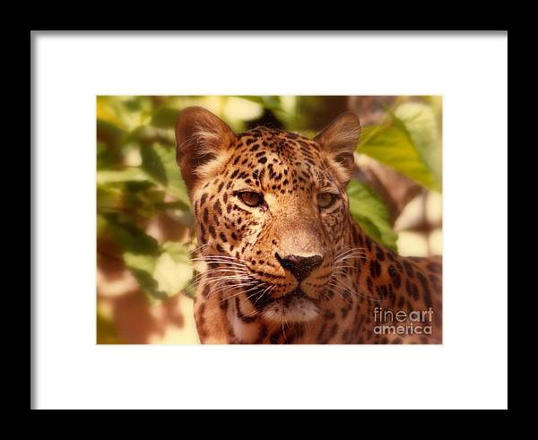 Nola Framed Print featuring the photograph New Orleans In The Eyes Of The Leopard by Michael Hoard