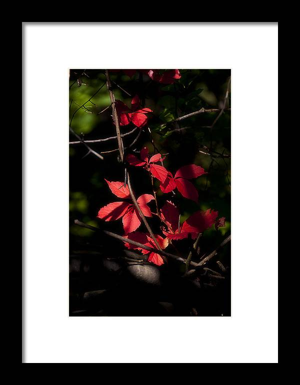 Leaf Framed Print featuring the photograph In The Shade by Celso Bressan