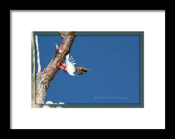 Macro Framed Print featuring the photograph In The Sky by Michaela Preston