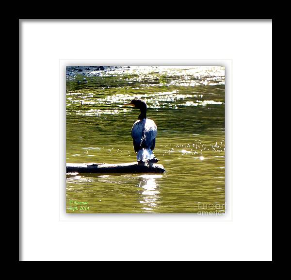 Sun Framed Print featuring the photograph In The Warmth Of The Sun by Rennae Christman