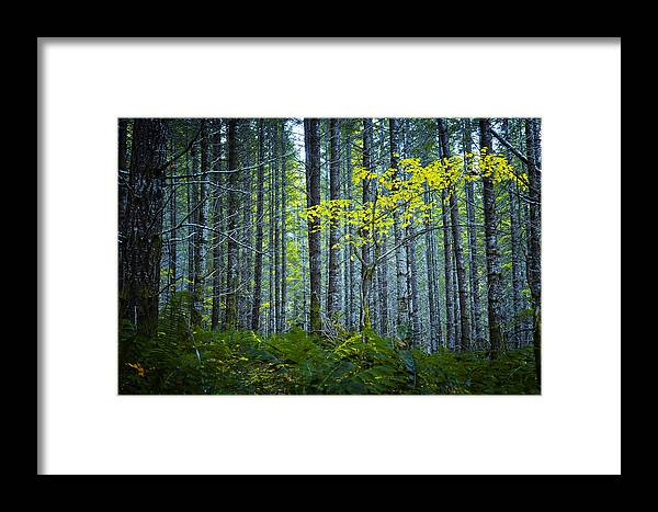 Woods Framed Print featuring the photograph In The Woods by Belinda Greb