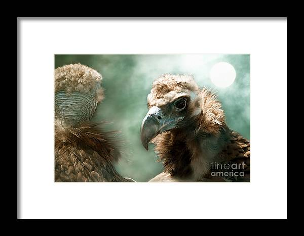 Vulture Framed Print featuring the photograph Incognito by Christine Sponchia