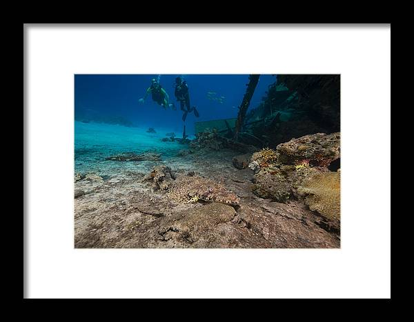 Animal Framed Print featuring the photograph Indian Ocean Crocodilefish Papilloculiceps Longiceps In The Red Sea. by Stephan Kerkhofs
