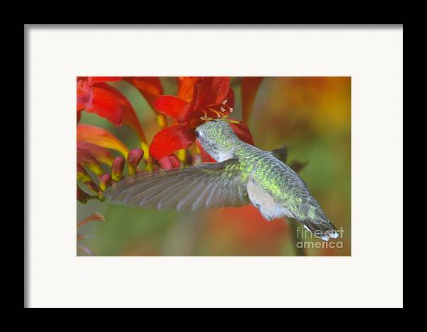 Wings Framed Print featuring the photograph Indulgence by Jeff Swan