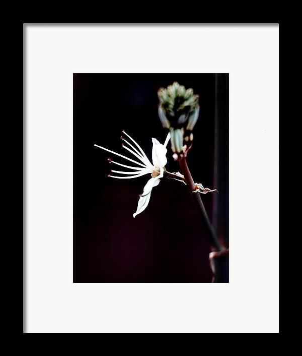 Beautiful Framed Print featuring the photograph infrared Asphodel by Stelios Kleanthous