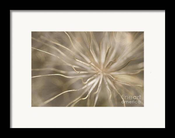 Andalucia Framed Print featuring the photograph Inside by Anne Gilbert