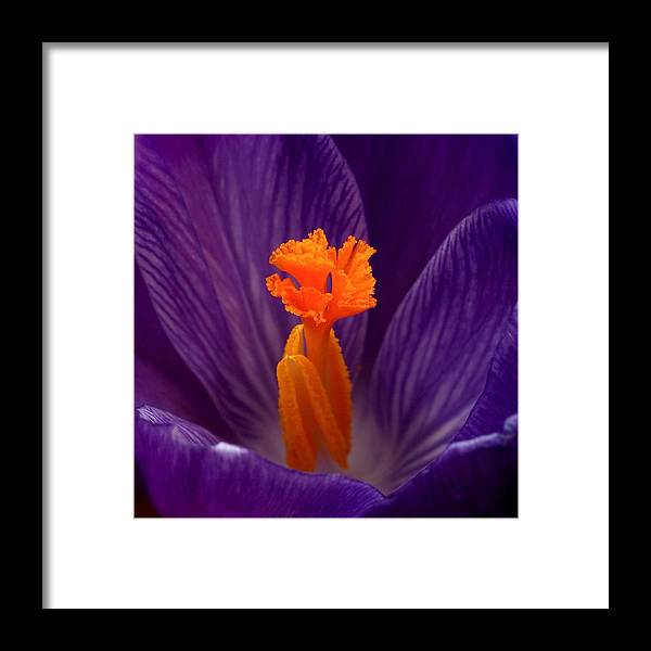 Crocus Framed Print featuring the photograph Interior Design by Rona Black
