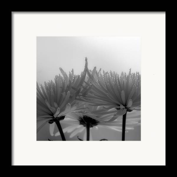 Flowers Framed Print featuring the photograph Intimacy by Tom Druin