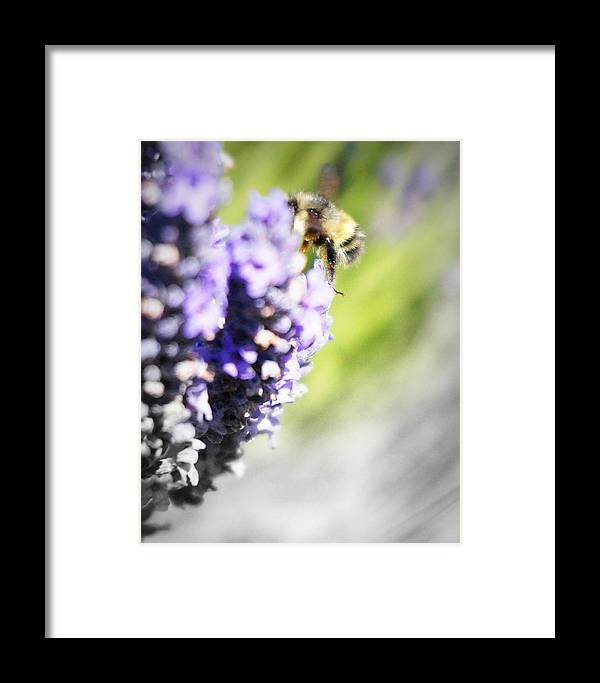 Bee Framed Print featuring the photograph Into My World by Winnie Marth