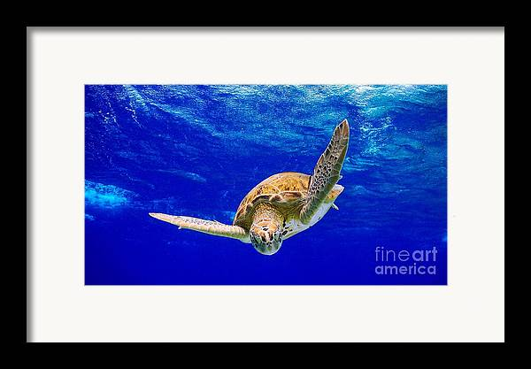 Diving Framed Print featuring the photograph Into The Blue by Isabelle Kuehn