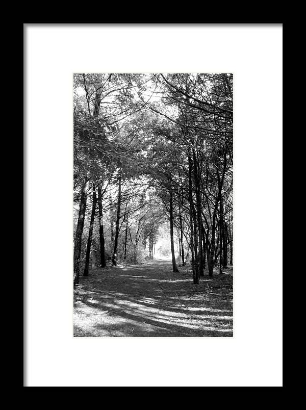 Bird Framed Print featuring the photograph Into The Light by Art Dingo