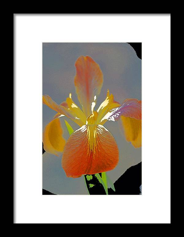 Floral Framed Print featuring the photograph Iris 62 by Pamela Cooper