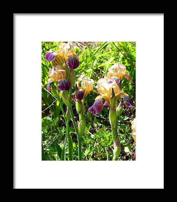 Iris Framed Print featuring the photograph Iris In The Wild by Barbara McDevitt