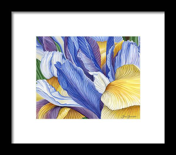 Iris Framed Print featuring the painting Iris by Jane Girardot