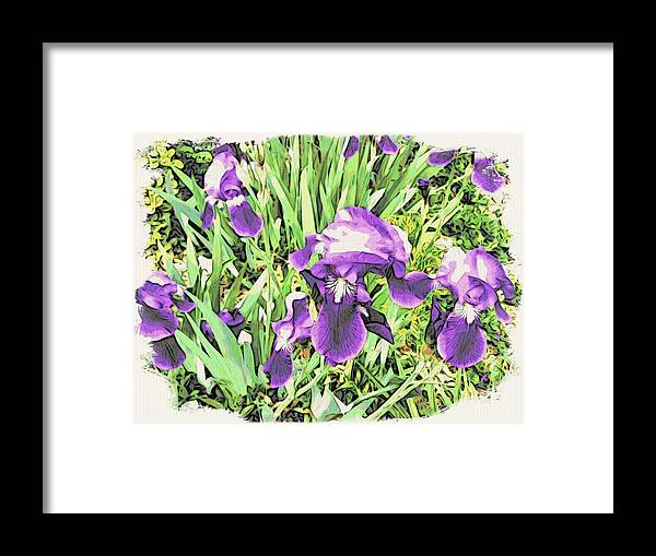 Irises Framed Print featuring the photograph Irises In The Garden by Alice Gipson