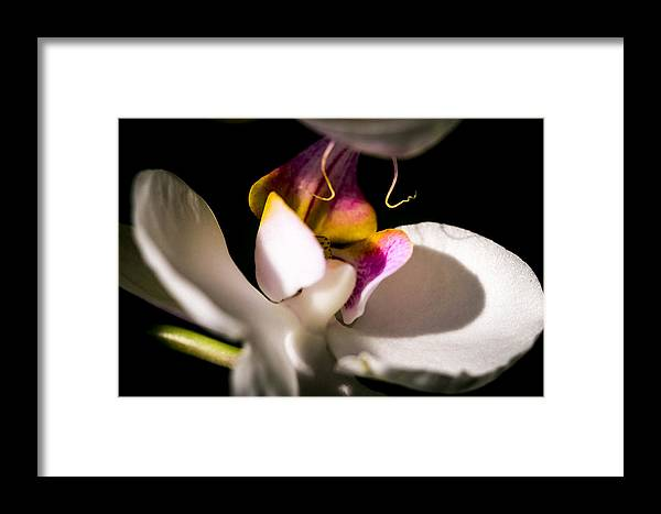 White-pink Orchid Framed Print featuring the photograph Island Dream by Sheree Lauth