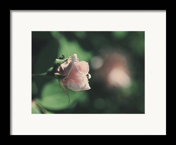Flowers Framed Print featuring the photograph It'll Be Alright by Laurie Search
