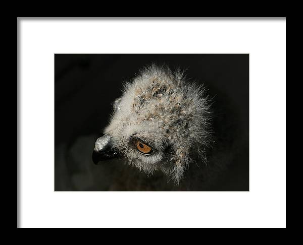 Owl Framed Print featuring the photograph It's A Big World Out There by Isaac Green