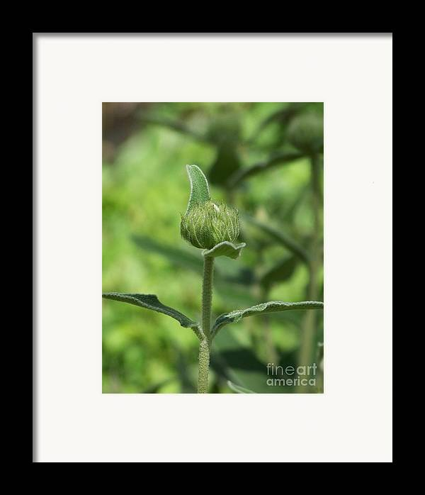 Plants Framed Print featuring the photograph Its A Green World by Kathy McClure