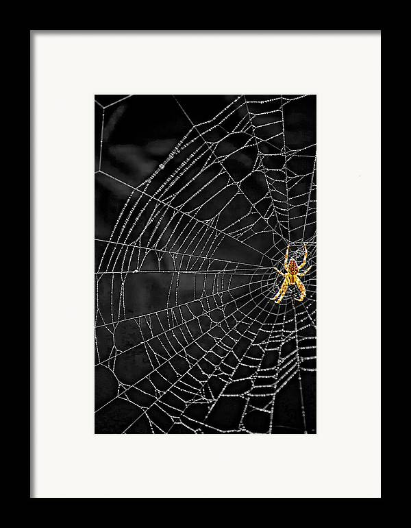 Bugs Framed Print featuring the photograph Itsy Bitsy Spider My Ass 3 by Steve Harrington