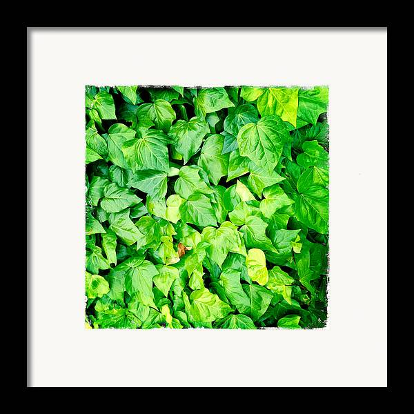 Lush Framed Print featuring the photograph Ivy by Les Cunliffe
