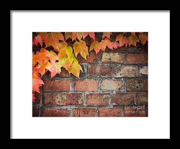Aged Framed Print featuring the photograph Ivy Over Brick Wall by Mythja Photography