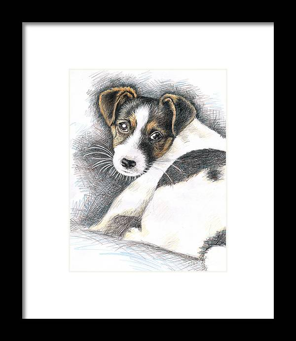 Dog Framed Print featuring the drawing Jack Russell Puppy by Nicole Zeug