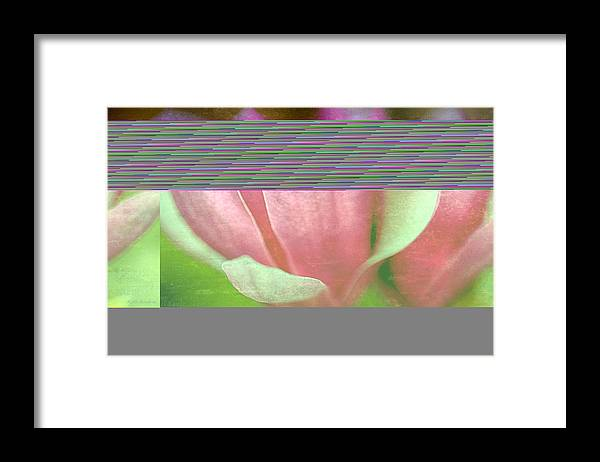 Japanese Framed Print featuring the photograph Japanese Magnolias by Keith Gondron