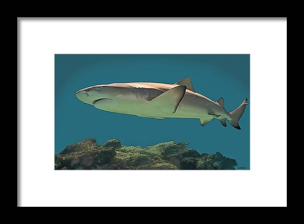 Shark Framed Print featuring the digital art Jaws by Larry Linton