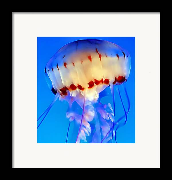 Jellyfish Framed Print featuring the photograph Jellyfish 3 by Dawn Eshelman