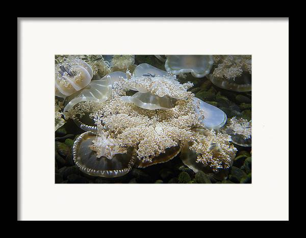Inner Framed Print featuring the photograph Jellyfish - National Aquarium In Baltimore Md - 121215 by DC Photographer