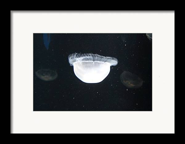 Inner Framed Print featuring the photograph Jellyfish - National Aquarium In Baltimore Md - 121223 by DC Photographer