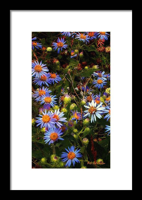 Daisies Framed Print featuring the painting Jewels Pastorale by RC DeWinter