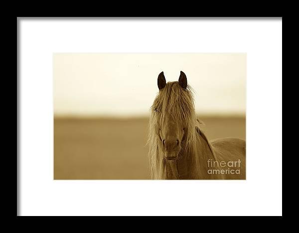Horse Framed Print featuring the photograph Jisepia by Christina Williams