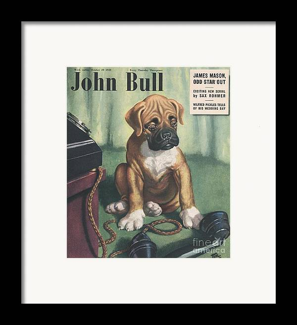 1940�s Framed Print featuring the drawing John Bull 1949 1940s Uk Dogs Magazines by The Advertising Archives