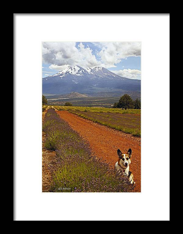 Johnny Framed Print featuring the photograph Johnny And The Mountain by Mick Anderson