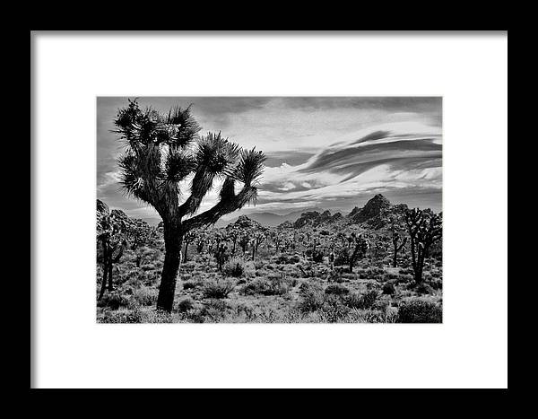 Joshua Tree Black And White Framed Print By Benjamin Yeager