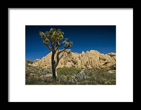 Art Framed Print featuring the photograph Joshua Tree In Joshua Tree National Park No. 323 by Randall Nyhof