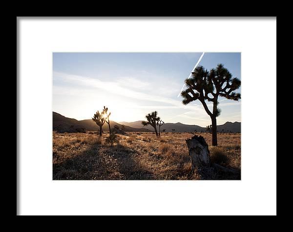 Joshua Tree Framed Print featuring the photograph Joshua Tree Sunset by John Daly