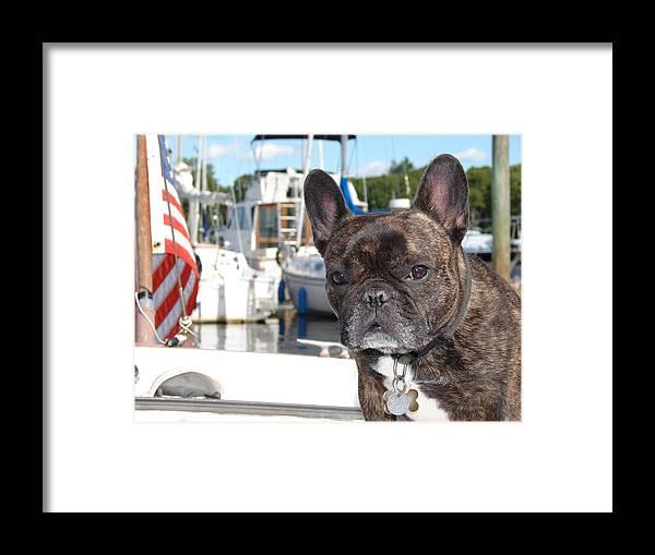 French Bulldog Framed Print featuring the photograph Joshy No4 by Mia Capretta