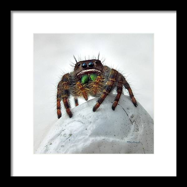 Duane Mccullough Framed Print featuring the photograph Jumper Spider 2 by Duane McCullough
