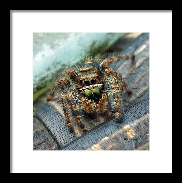 Duane Mccullough Framed Print featuring the photograph Jumper Spider 3 by Duane McCullough