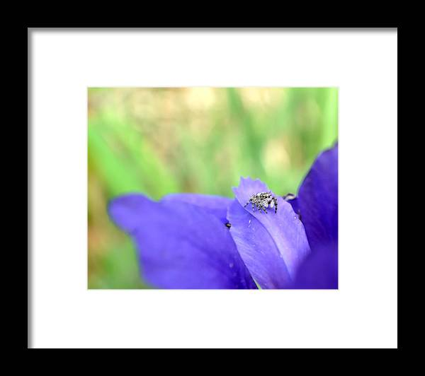 Spider Framed Print featuring the photograph Jumping Spider by Deena Stoddard